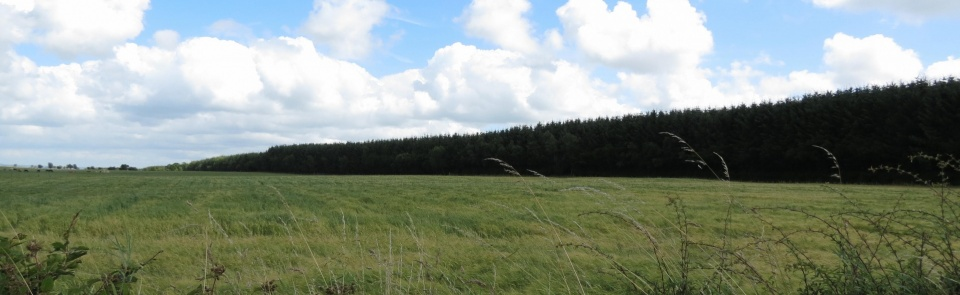Scots Dyke, erected 1552 following treaty to define Anglo-Scottish border